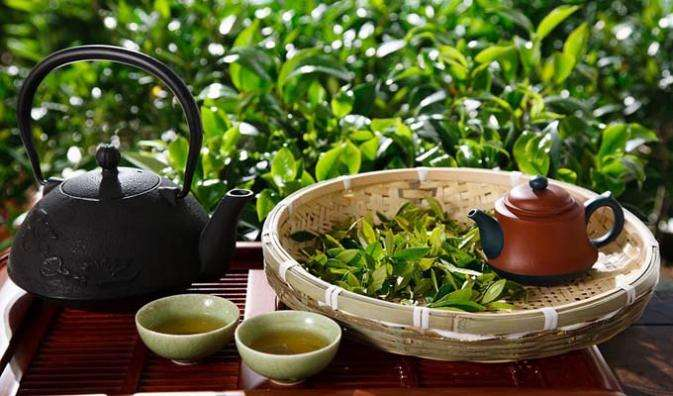 春茶开采期已至 气相色谱仪等检测仪器助力提升茶叶品质